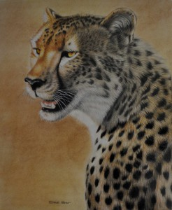 Cheetah with out frame 2