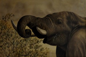 Elephant with out a frame