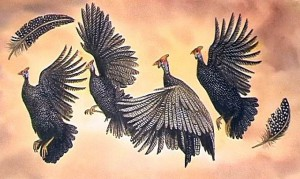 Guiniea fowls