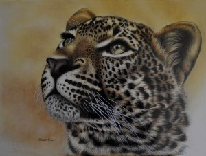 Leopard head with out frame